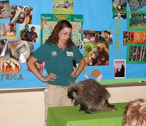Teaching a lesson at the Philadelphia Zoo with Needles a North American Porcupine.